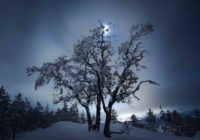 snowy tree and moon