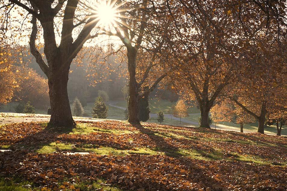 Royal Oak - Beautiful
